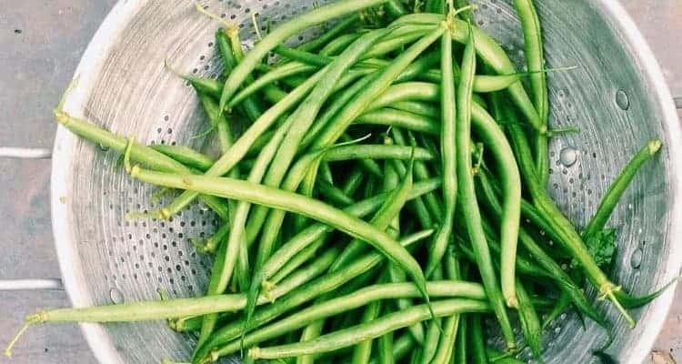 Grüne Bohnen in einem Sieb