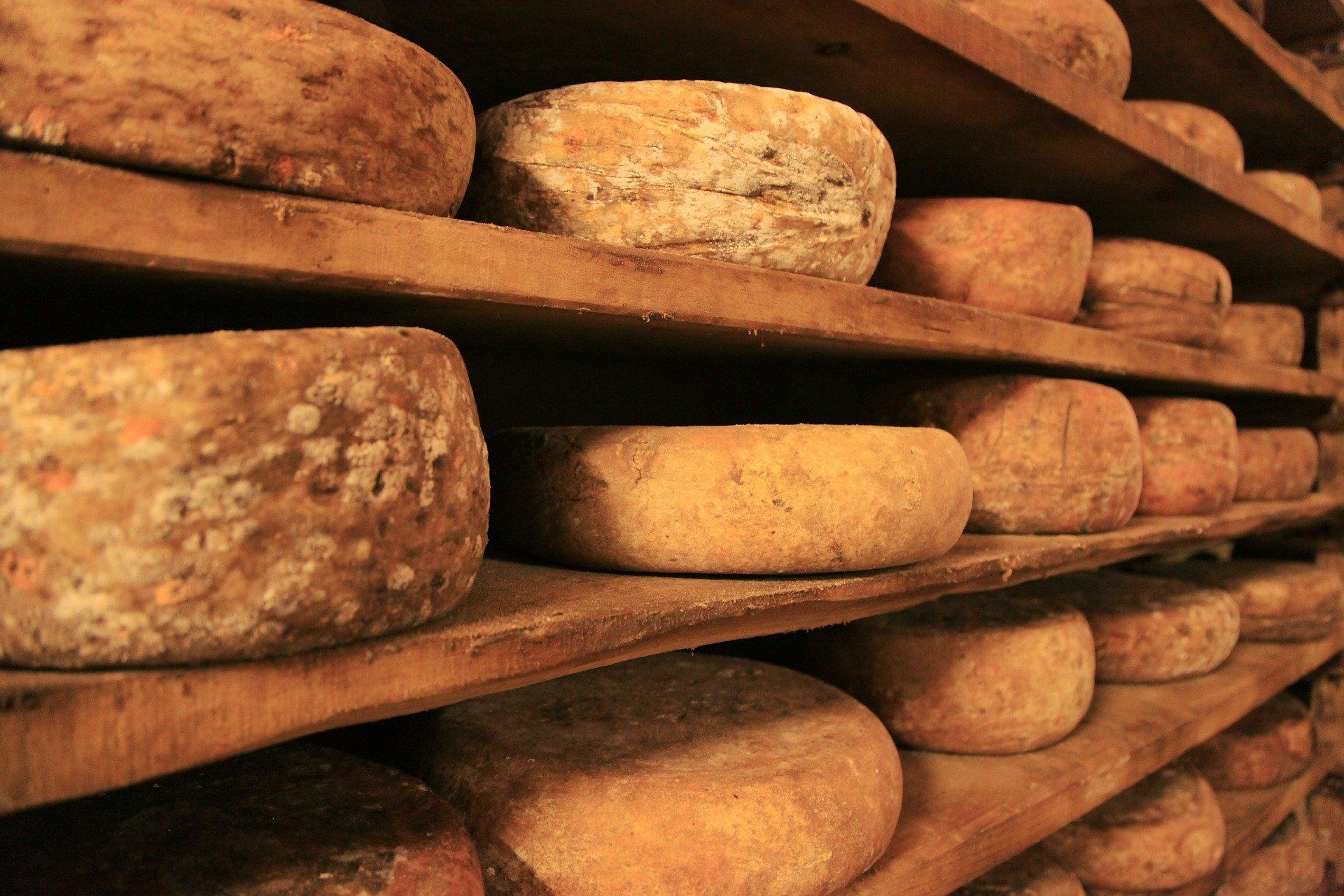 Käseschneider